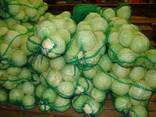 Θα πωλούν λάχανο χονδρεμπόρου Καζακστάν - фото 2